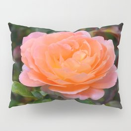 Peach Rose by Teresa Thompson Pillow Sham
