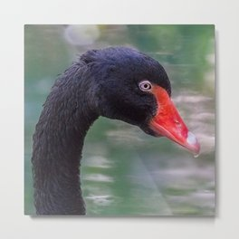 The Pure Elegance which is Swan Metal Print