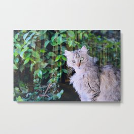Cat to Rule the World with Metal Print