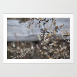 faded flowers 1 Art Print