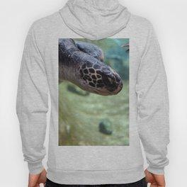 Turtle Time Hoody
