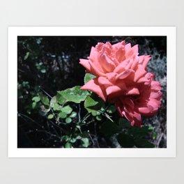 Flowers #16 Art Print
