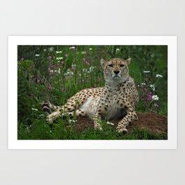 Cheetah Amidst Spring Flowers Art Print
