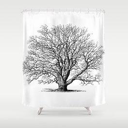 oak tree botanical no2 Shower Curtain