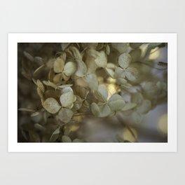 Delicate hydrangea flower close-up Art Print