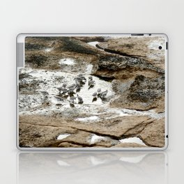 Sandpipers feeding in a tide pool Laptop & iPad Skin