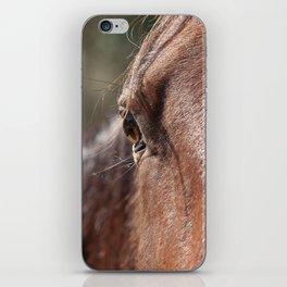 Horse's Gaze iPhone Skin