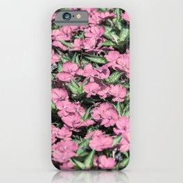 Impatiens Interspecific Big Bounce flower iPhone Case