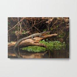 Gator in a Louisiana Swamp Metal Print