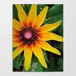 Beneath The Summer Sun Poster