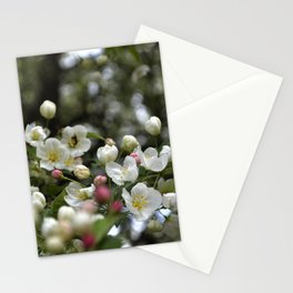 Red Buds and White Blossoms Stationery Cards