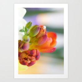 Blooming fresia Art Print