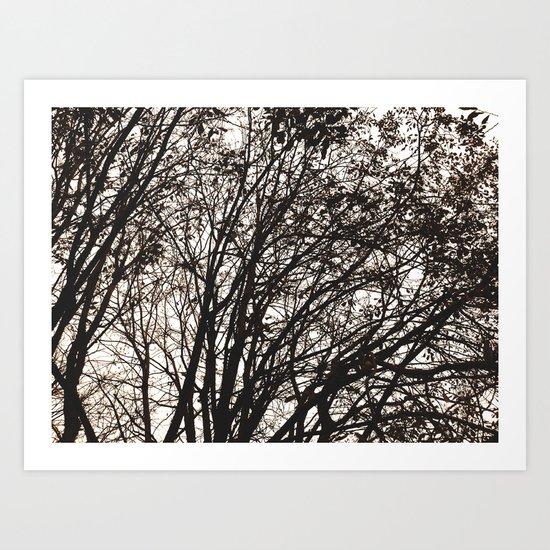 Branches Art Print