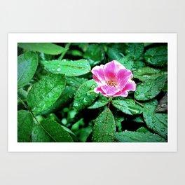 Pink Flower in the Rain 2 Art Print