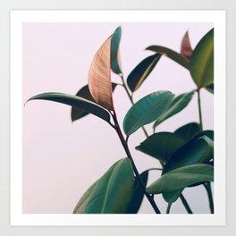 Ficus Elastica #4 Art Print