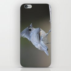 A Tufted Titmouse iPhone & iPod Skin