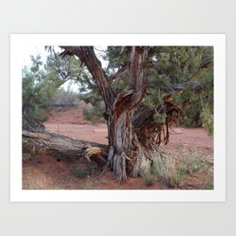 Canyon Tree Art Print