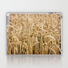 Golden Wheat Laptop & iPad Skin