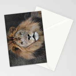 Male Lion Portrait Stationery Cards