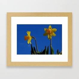 Two Daffodils Framed Art Print