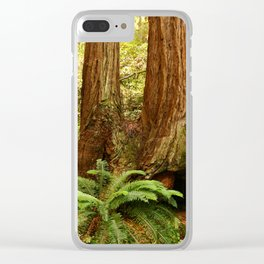 Fern and Sequoia Trunks Clear iPhone Case