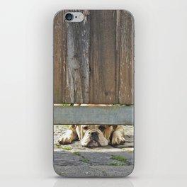 Waiting Bulldog iPhone Skin