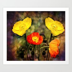 Yellow and Red Poppies Art Print