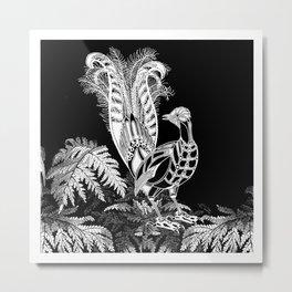 Lyrebird Metal Print