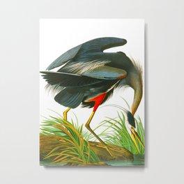 Great blue heron John James Audubon Vintage Scientific Bird Illustration Metal Print