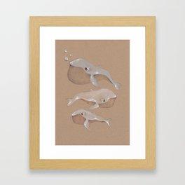 Albino Humpbacks Framed Art Print