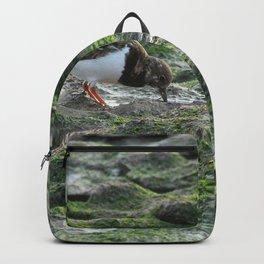 Sandpiper Coastal Bird feeding on Seashore Backpack