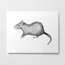 A Rat Metal Print