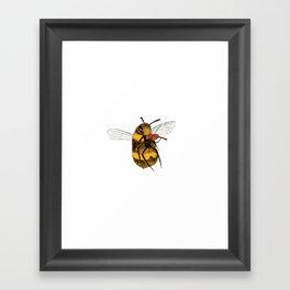 Bee tries Violin Framed Art Print