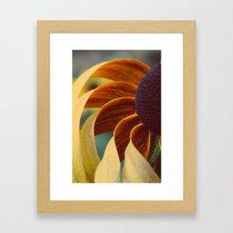 Black eyed susan 04 Framed Art Print