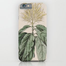 Flower 1027 justicia flavicoma Hairy Yellow headed Justicia13 iPhone Case