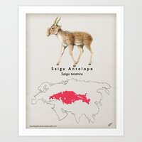 Saiga Art Print