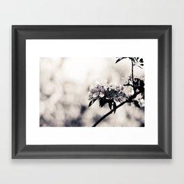 Black and White Flowers Framed Art Print