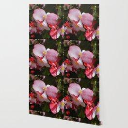 Begonia in the Rose Garden Wallpaper