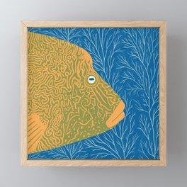 Humphead Wrasse Framed Mini Art Print