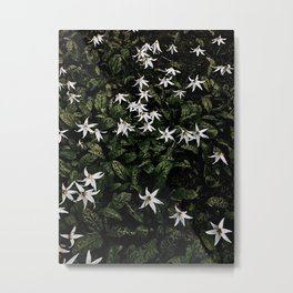 White Fawn Lilies; Open Your Heart Metal Print