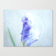Concrete beauty Canvas Print