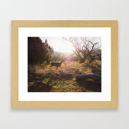 Doe in the morning sun. Palo Duro Canyon, Texas. Framed Art Print