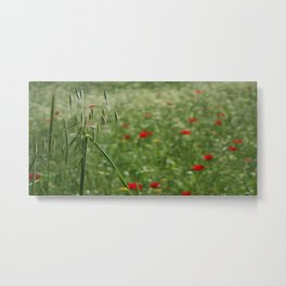 Seed Head With A Beautiful Blur of Poppies Background Metal Print