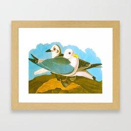 Kittiwake Gull Framed Art Print