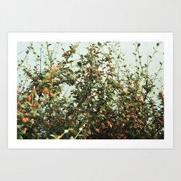 autumn berries Art Print