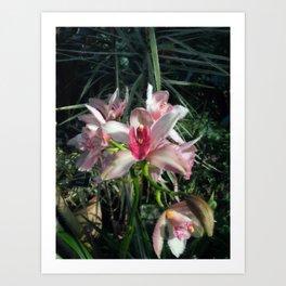 Inspiration Orchids  Art Print