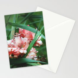 Lace roses Stationery Cards