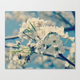 Springtime Blues Canvas Print