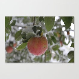 Cool Snack  Canvas Print