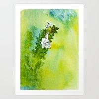 Study of a Weird Little Orchid Art Print